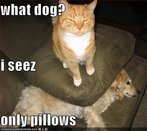 funny pictures cat hides dog under pillow