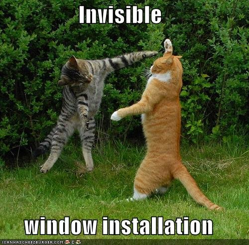 funny pictures cat install invisible windows