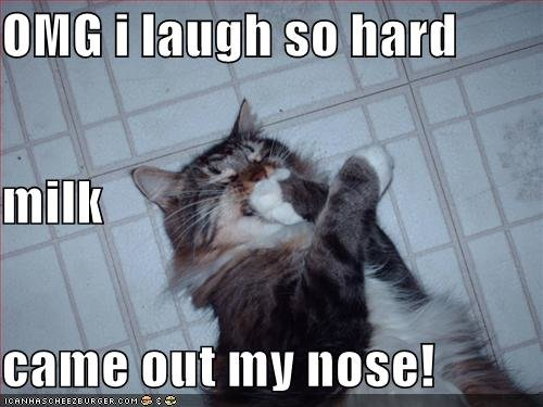 funny pictures cat laughs hard