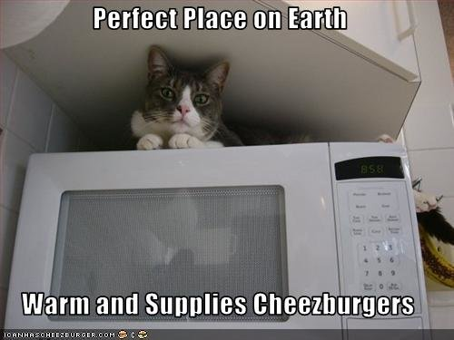 funny pictures cat loves microwave