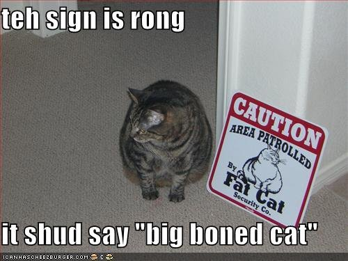 funny pictures cat sign big boned