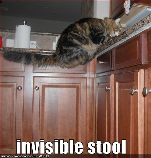 funny pictures cat sits invisible stool