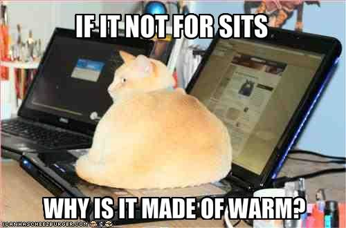 funny pictures cat sits your keyboard