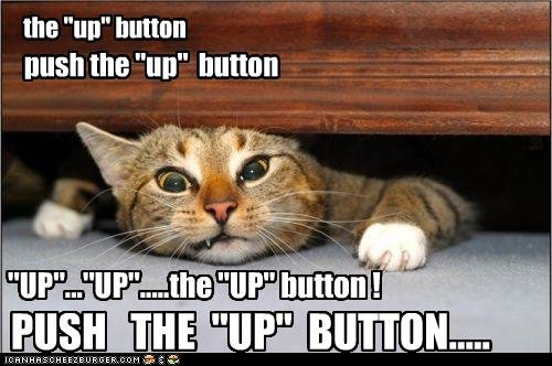 funny pictures cat squished