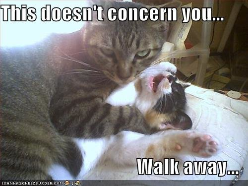 funny pictures cat strangles cat