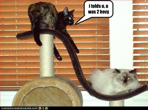 funny pictures cat too heavy