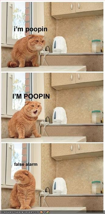 funny pictures cat tries poop