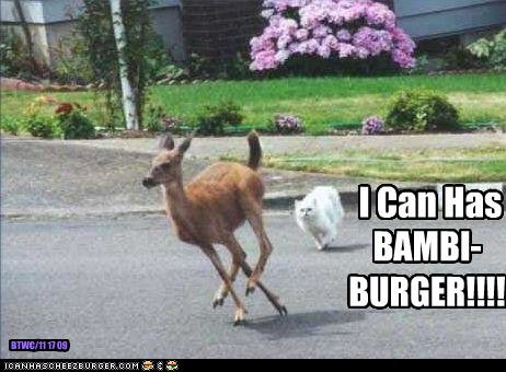 funny pictures cat wants deer burger