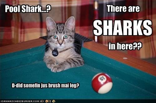 funny pictures cat wonders pool sharks