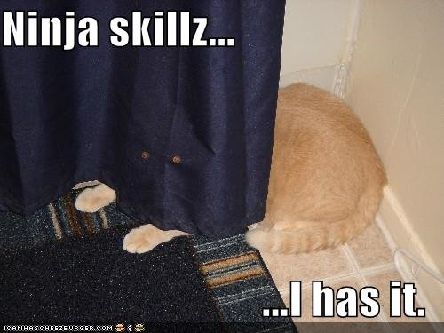 funny pictures curtain ninja cat