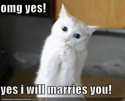 funny pictures excited proposal cat