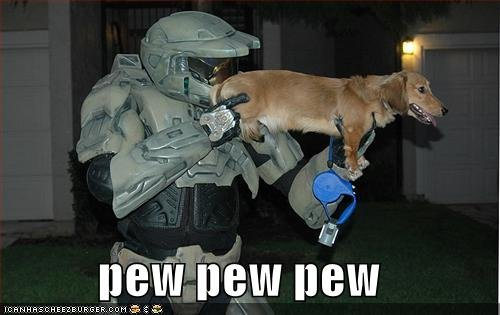 funny pictures halo dog pew