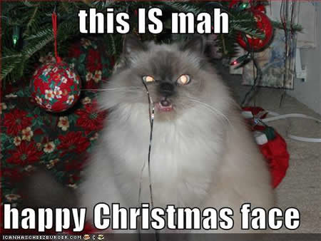 funny pictures happy christmas face