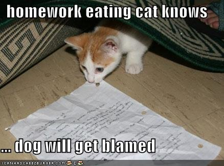 funny pictures homework eating cat