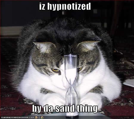 funny pictures hourglass cat
