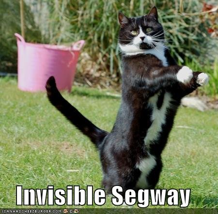 funny pictures invisible segway cat
