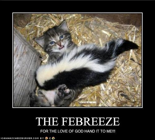 funny pictures kitten begs for febreeze