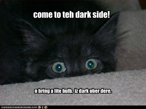 funny pictures kitten comes dark side