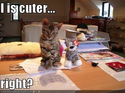 funny pictures kitten cuter stuffed animal