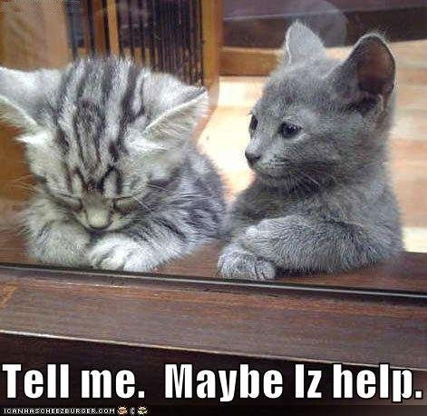 funny pictures kitten offers help sad friend