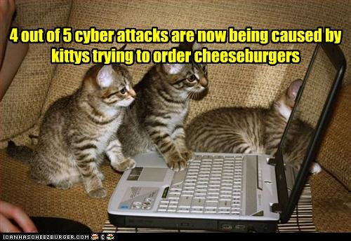 funny pictures kittens try order burgers