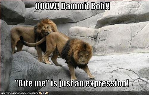 funny pictures lions bite eachother