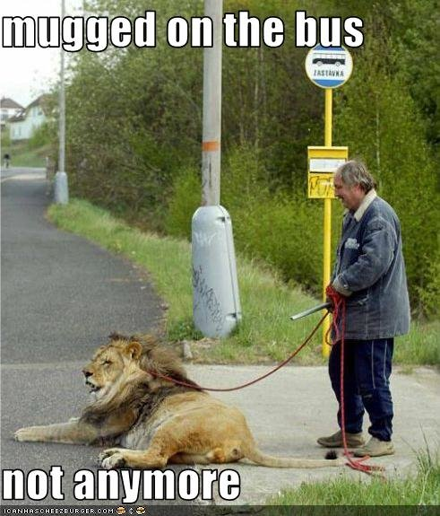 funny pictures man lion