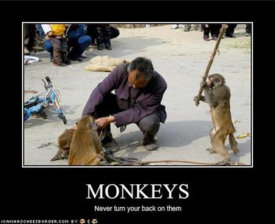 funny pictures never turn your back monkeys
