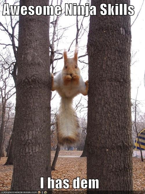 funny pictures ninja skills squirrel