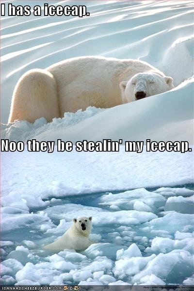 funny pictures polarbear