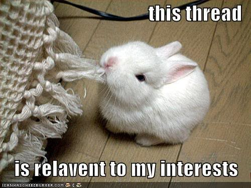 funny pictures rabbit eats thread