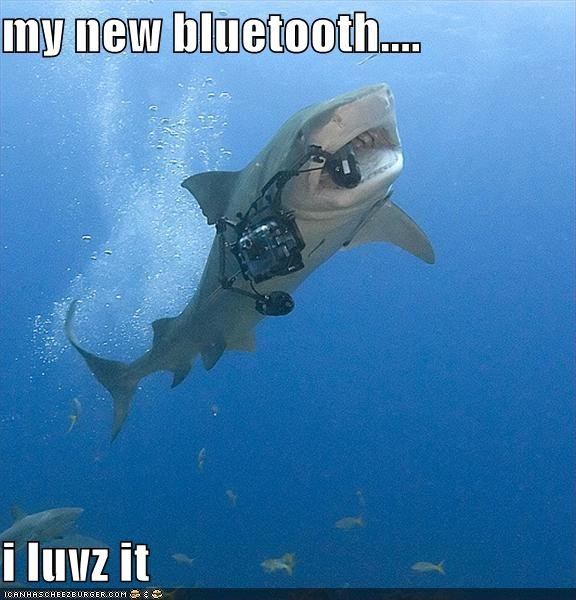 funny pictures shark bluetooth