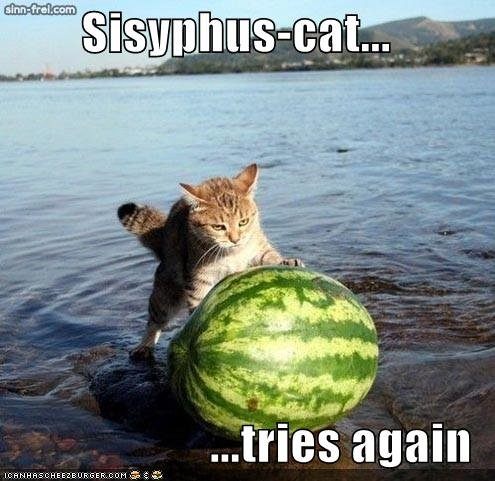 funny pictures sisyphus cat watermelon water