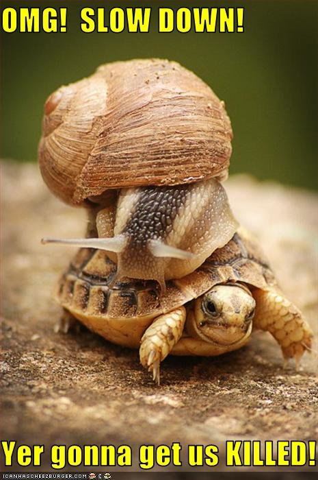 funny pictures snail turtle