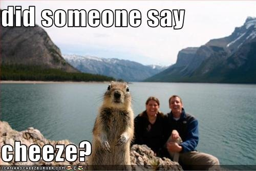 funny pictures squirrel wants cheese