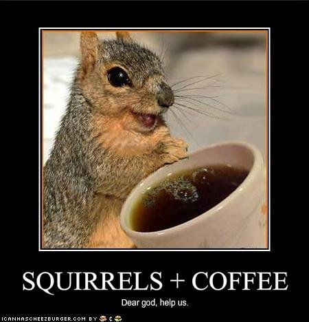 funny pictures squirrels discovered coffee