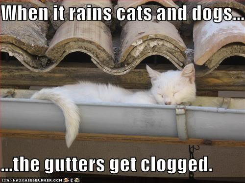 funny pictures gutters are clog