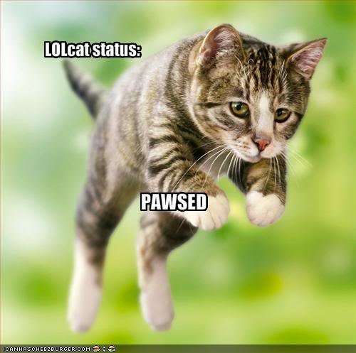 funny pictures lolcat pause