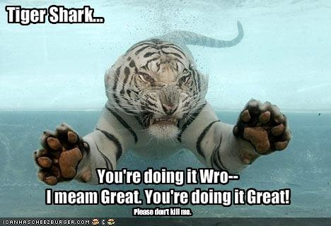 funny pictures tiget shark doing right