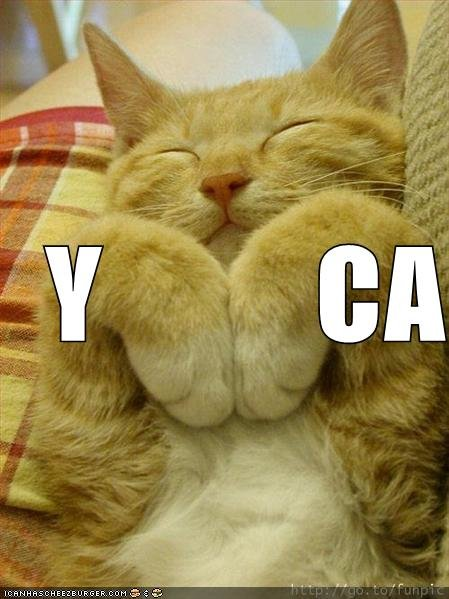 funny pictures ymca cat