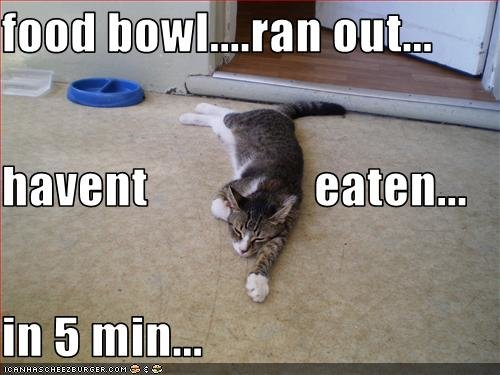 funny pictures your cat starving from not eating for five minutes