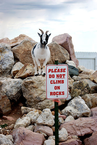 funny sign goat