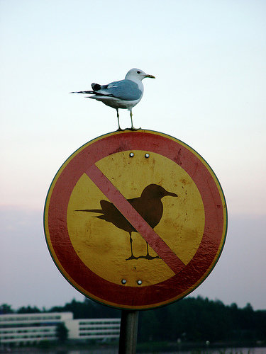 funny sign seagull