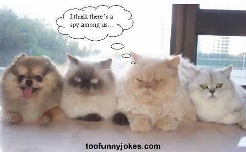 funny photo002 - haha pictures