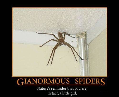 gianormous spiders