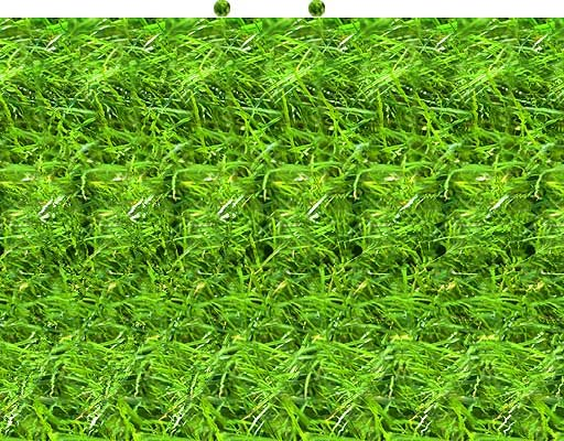 grasshopper - stereograms and 3-d images (no glasses required!)