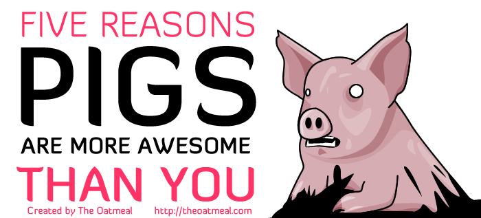header - 5 reasons pigs are way more awesome than you