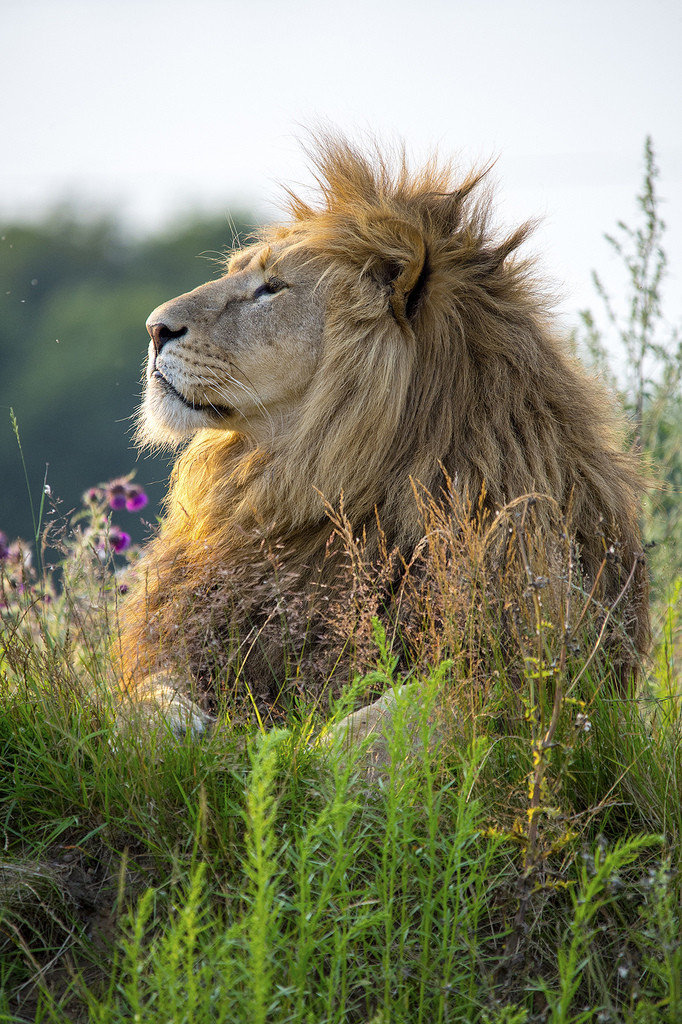 his majesty king