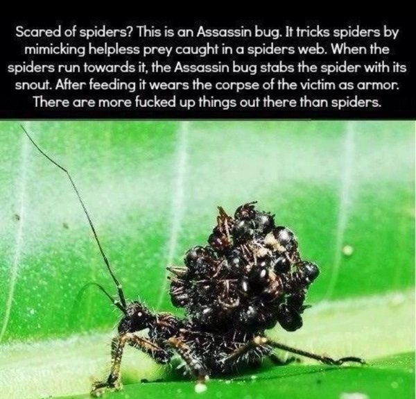 not mentioned yet assassin bug well can read for yourself