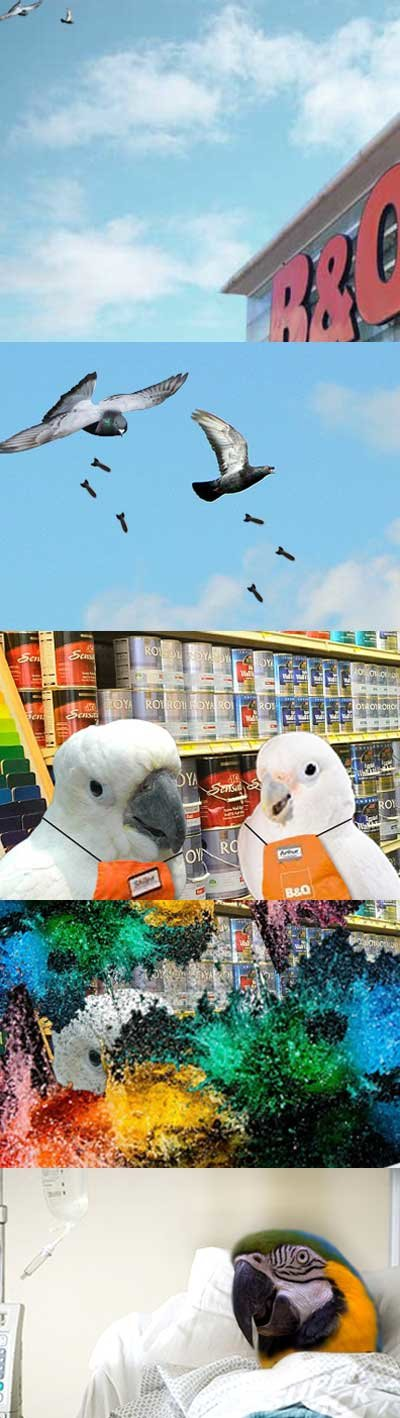 parrots are made